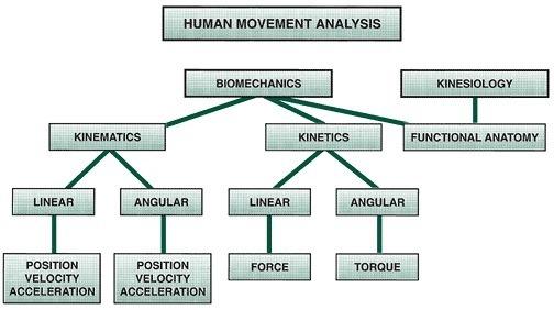 01-human-movement-analysis-biomechanics-vs-Kinesiology-kinematics-vs-kinetics
