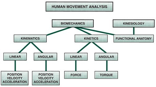 01-human-movement-analysis-biomechanics-vs-Kinesiology-kinematics-vs-kinetics