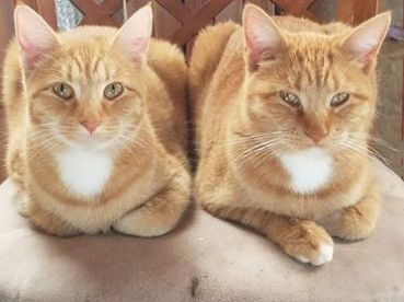 Lea on the left, Munca on the right